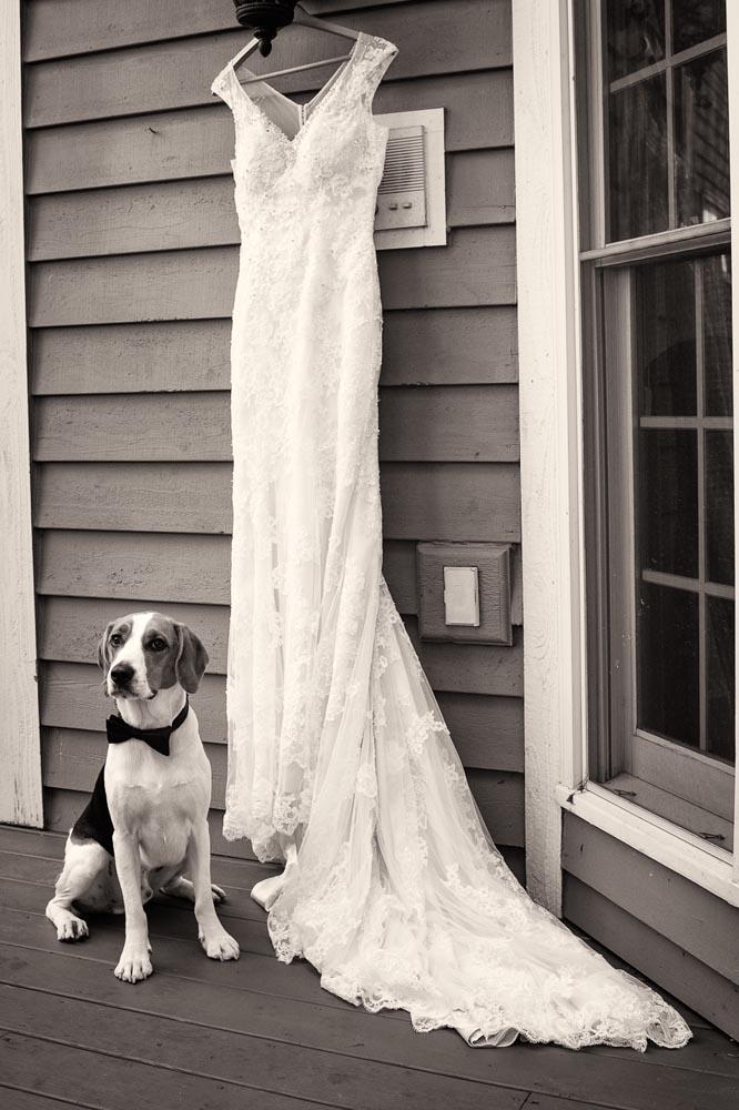 Wedding dress with dog